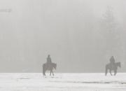 trzy konie we mgle.JPG