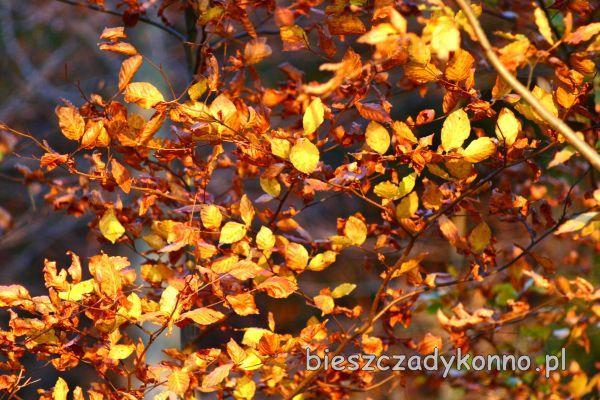 lasy w szkle bieszczady warsztaty.jpg